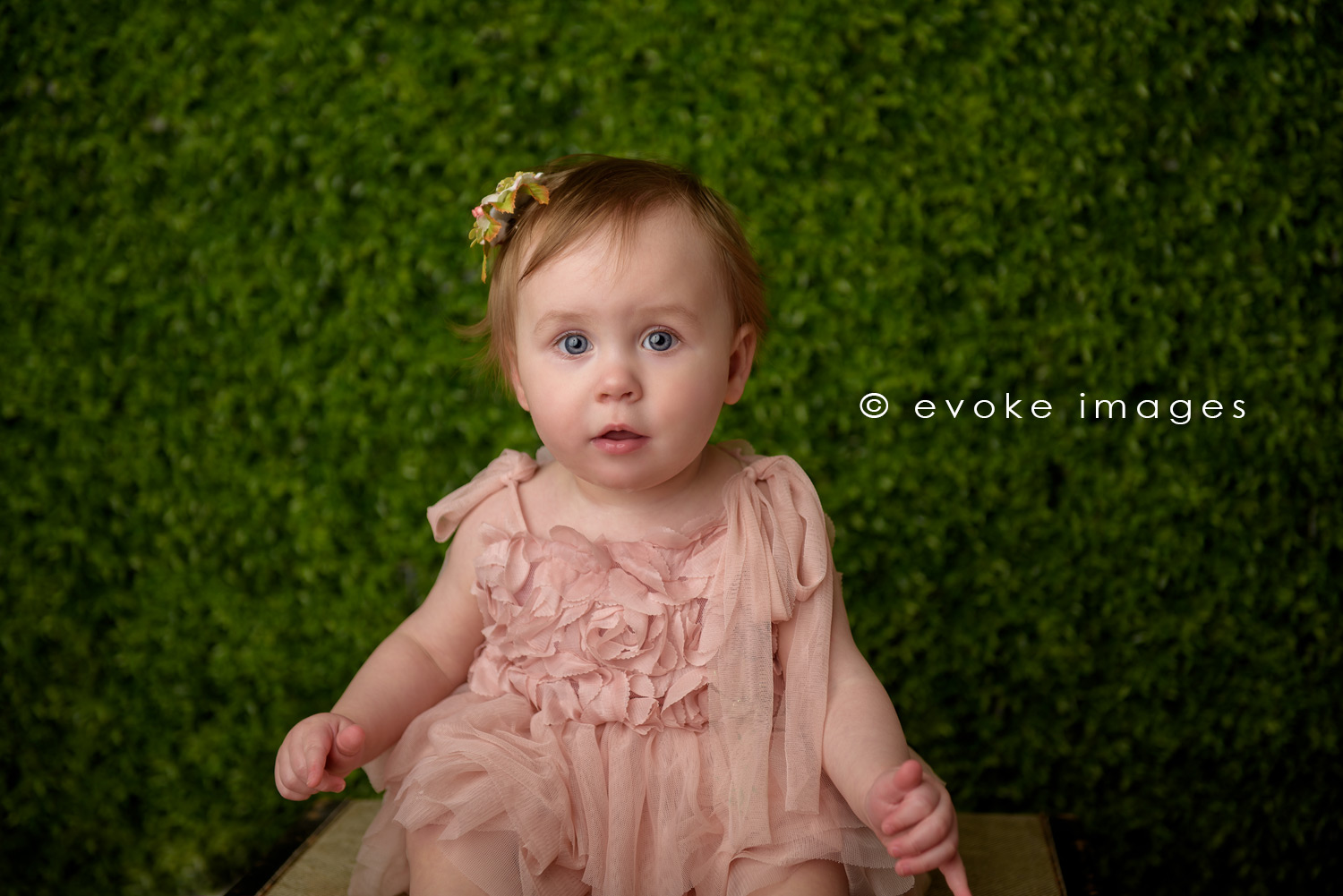 baby girl portrait hedge wall anchorage Alaska